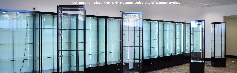 head anatomy project